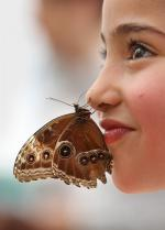 pb-110406-butterflies-jm-04 photoblog900